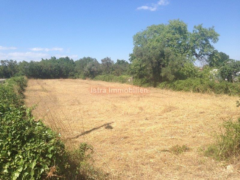 Građevisko i dio poljoprivrednog zemljišta veličine 1350m2